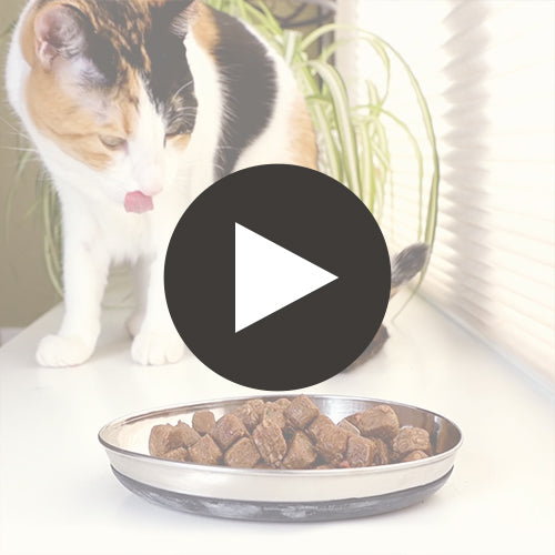 Feline Raw Frozen Pronto <br> Chicken & Salmon Featured Video