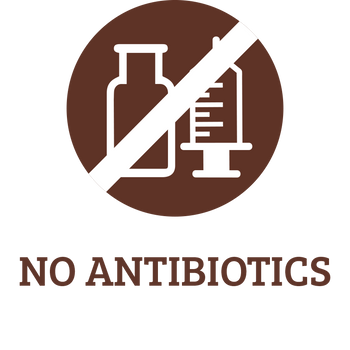 No Antibiotics