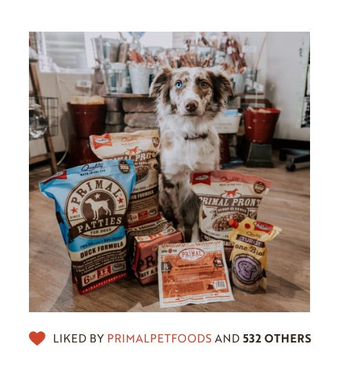 Instagram post of dog surrounded by Primal products