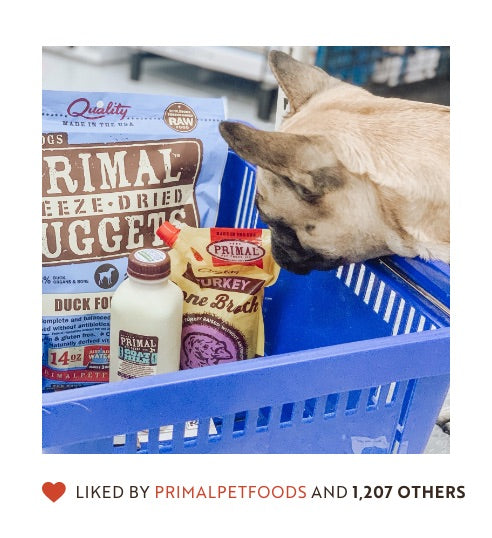Dog looking into basket of Primal freeze dried nuggets, bone broth and goat milk