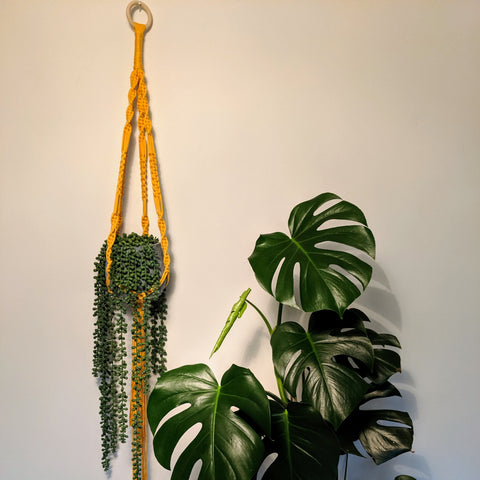Recycled T-Shirt Yarn Macrame Plant Hanger Workshop