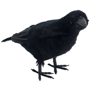 Black Feather Crow
