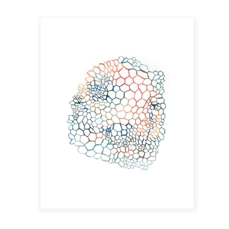 Honeycomb 8x10 Art Print