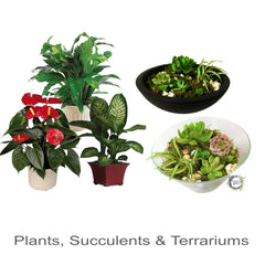 Plants Succulents and Terrariums Narangba Florist