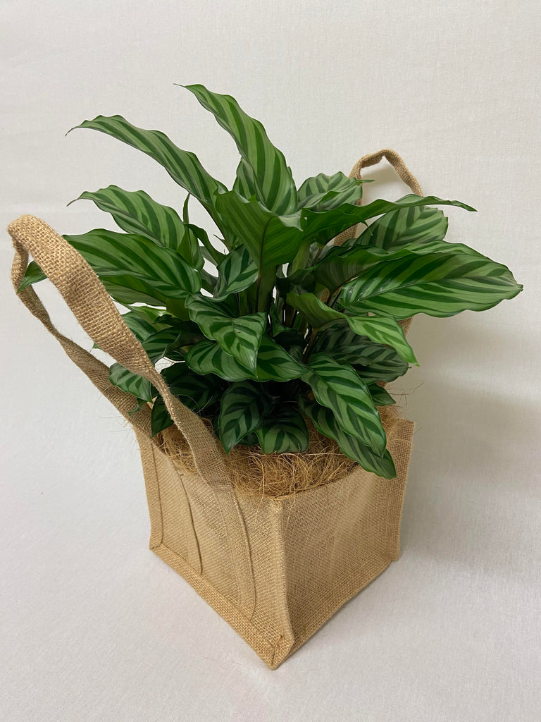 Calathea - Hessian Bag