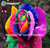 Rainbow Rose Flower Seeds