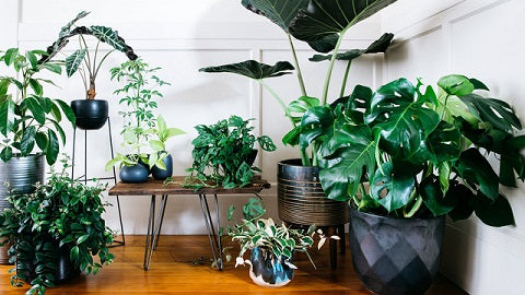 House plants for great home decor