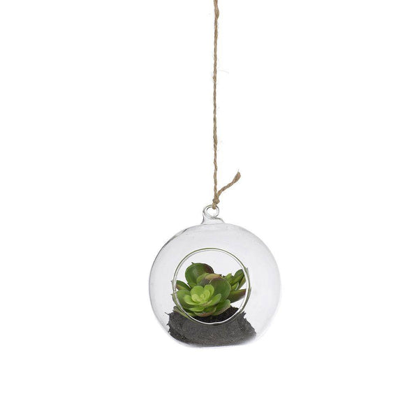 Large Hanging Glass Ball with Succulent Plant