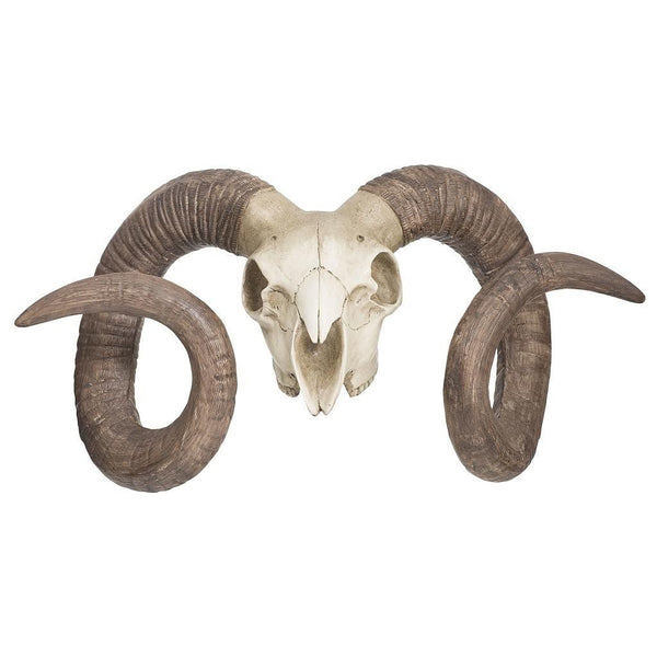 Bighorn Sheep Skull with Stand