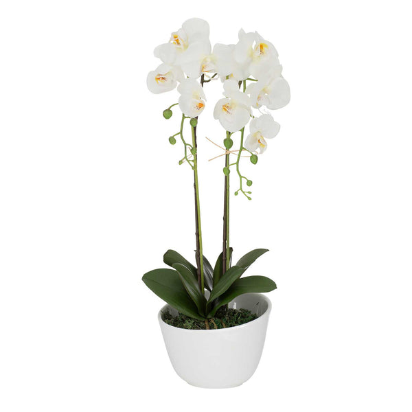 Potted White Artificial Orchid Flower Stems