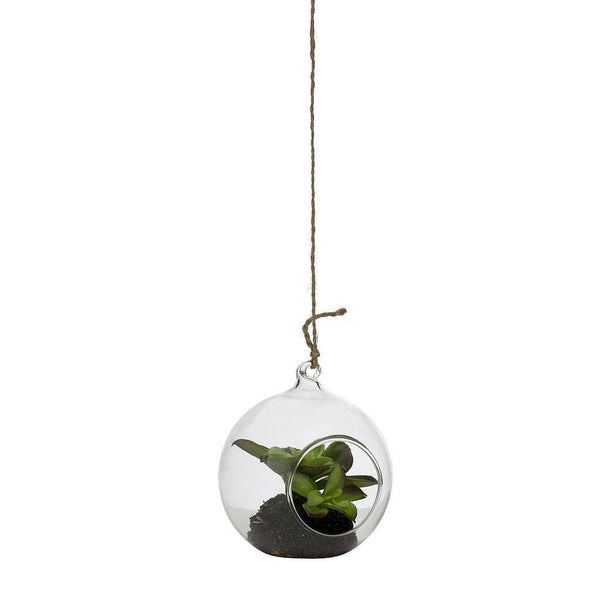 Small Hanging Glass Ball with Succulent Plant