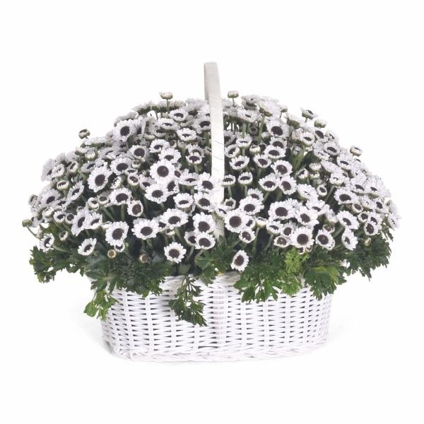 Winter White Flowers_Basket