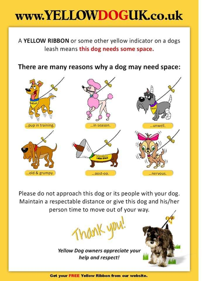 Yellow Dog Campaign - My dog needs space