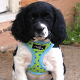 Charlie Soft Harness