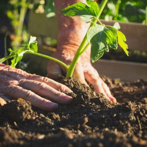 Why We Love to Garden- Seven Benefits of Organic Gardening