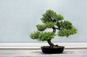 Pruning Your Bonsai Tree