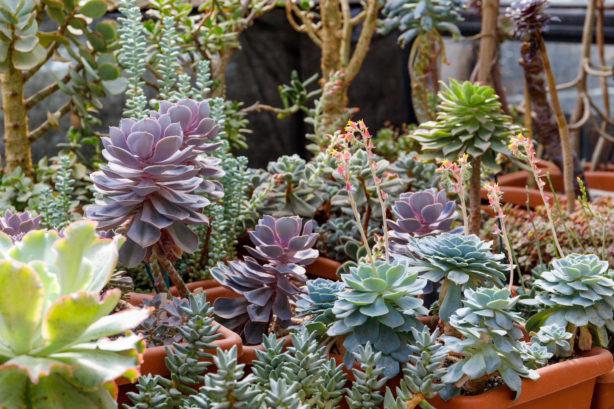 How To Propagate Succulents From Cuttings Garden Republic
