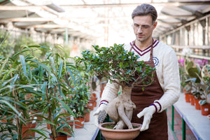 Fertilizing Your Bonsai 101