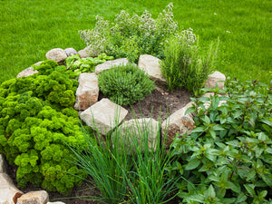 Herb Spiral Gardening: Adding A Twist To Your Growing Space