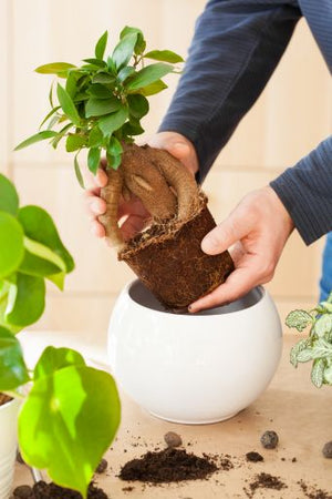 The Basic Needs of Your Bonsai