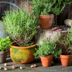Vegetable and Herb Gardening in Small Urban Spaces