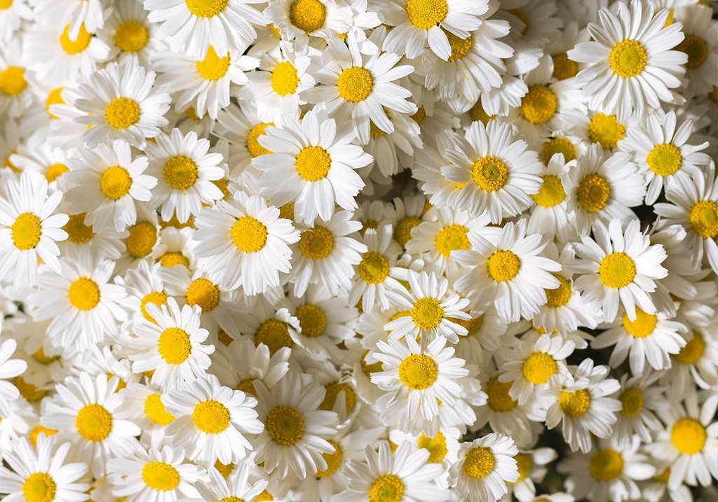 Why is chamomile used in skincare?
