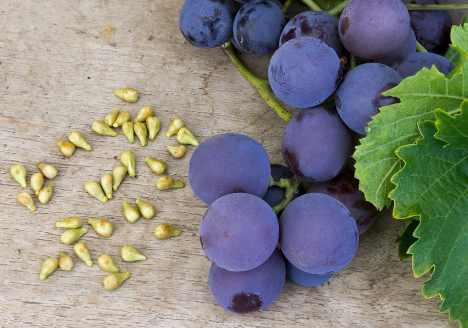 Grape Seed Oil (Vitis Vinifera)