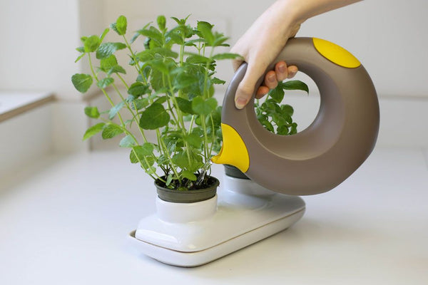 Cana - Playful watering can