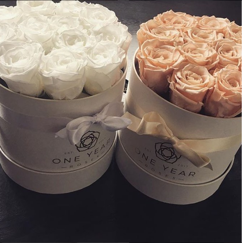 Peach and white 1 year roses