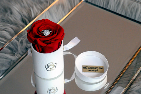 Will you marry me single rose lasts 1 year