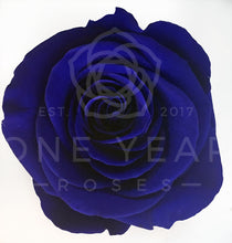 Light Up Enchanted Rose - Lasts 1 Year