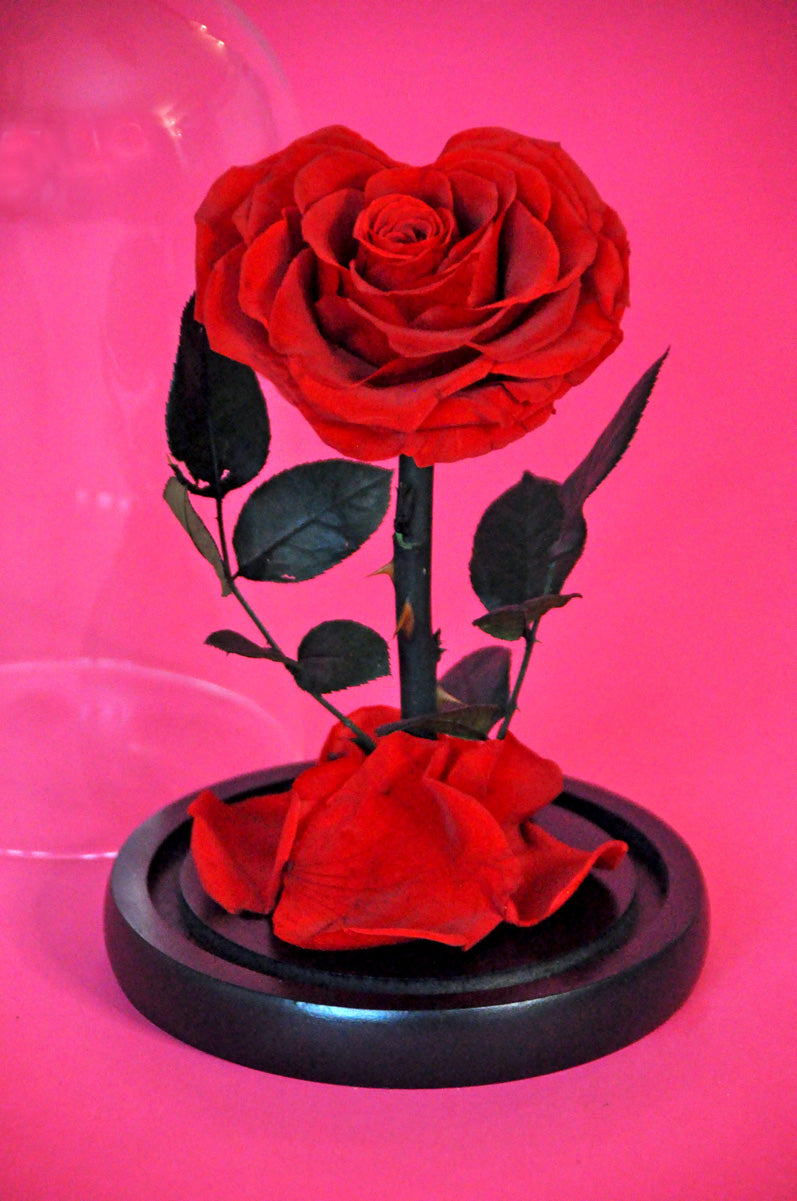 True Love Enchanted Rose - Lasts 1 Year