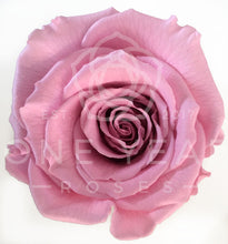 Petite Square Single Rose - Lasts 1 Year