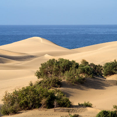 Transfer to Maspalomas area - return