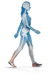 Cross-section of woman walking showing a skeletal illustration