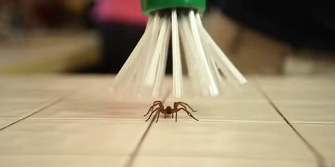 Image of My Critter Catcher - Spider & Insect Catcher