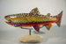 Brook Trout #171227-5