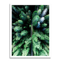 poster - Forest - Forest|stikeo.com