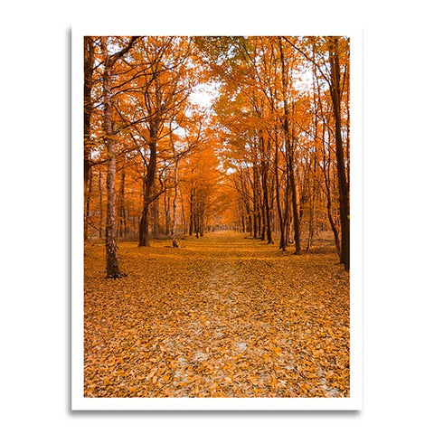 Yellow Forest Path