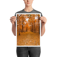 poster - Yellow Forest Path - Yellow Forest Path|stikeo.com