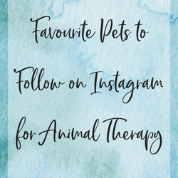 /blogs/caring-crate-blog/favourite-pets-to-follow-on-instagram-for-animal-therapy