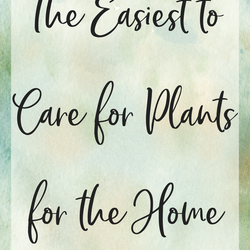 /blogs/caring-crate-blog/best-plants-for-the-home