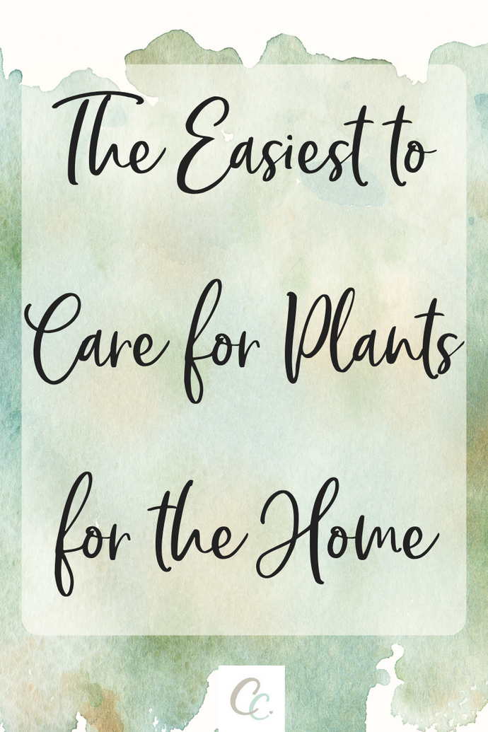 The Easiest To Care for Plants for the Home