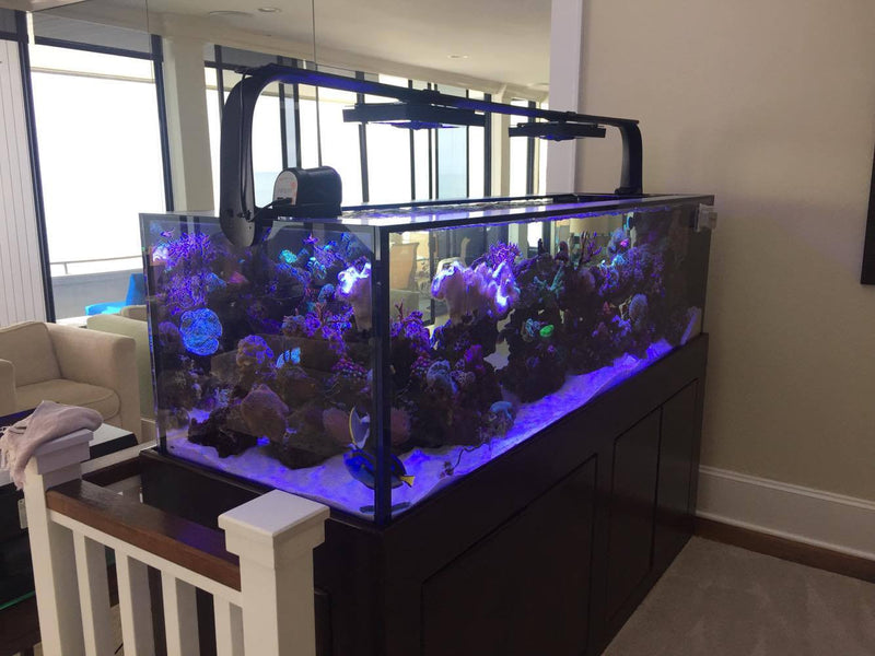150 Gallon Skinny Peninsula Starphire Aquarium