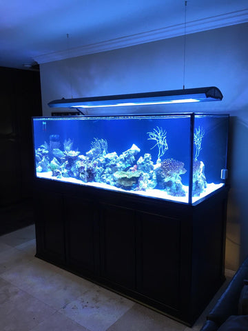 250 gallon Starphire aquarium by Crystal Dynamic