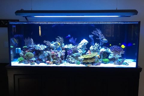 250 gallon Starphire tank by Crystal Dynamic