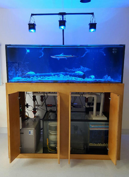 270 gallon aquarium Starphire glass steel stand