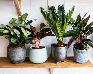 Houseplant & Pot Surprise Pick