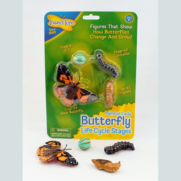 Plastic models of the stages of a butterfly life cycle.