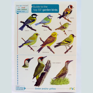 Field Guide to Top 50 British Garden Birds - The Nature Bug